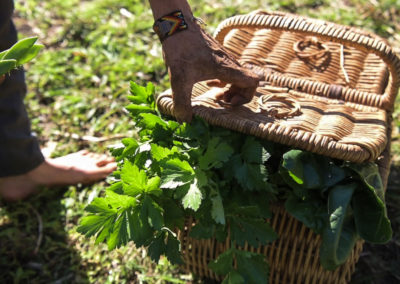 basket-goodness